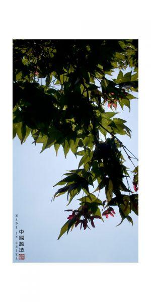 11_AMIE_POTSIC_MadeInChina.jpg