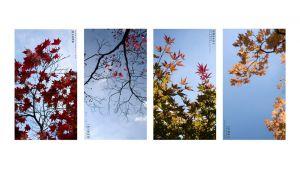 13_AMIE_POTSIC_Made_in_China_Fall_series_4.jpg