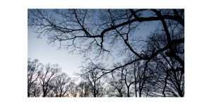 AMIE_POTSIC_27_EnchantedForest_02.jpg