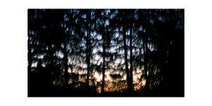 AMIE_POTSIC_34_EnchantedForest_09.jpg